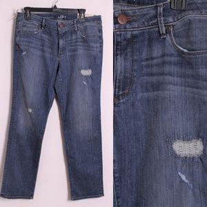 NWT Ann Taylor Loft Curvy Petite Straight Jeans 31